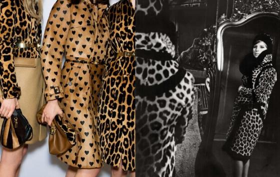 leopard-kolaz